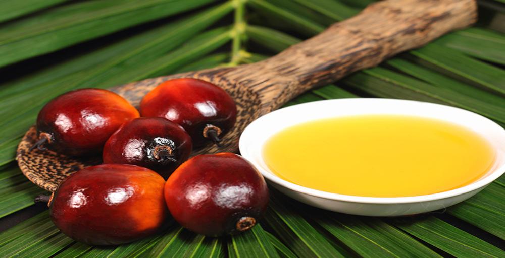 Schnittpunkt:2012: Gesundheitsgefahr Palmöl